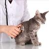 Ветеринарные клиники в Павлово